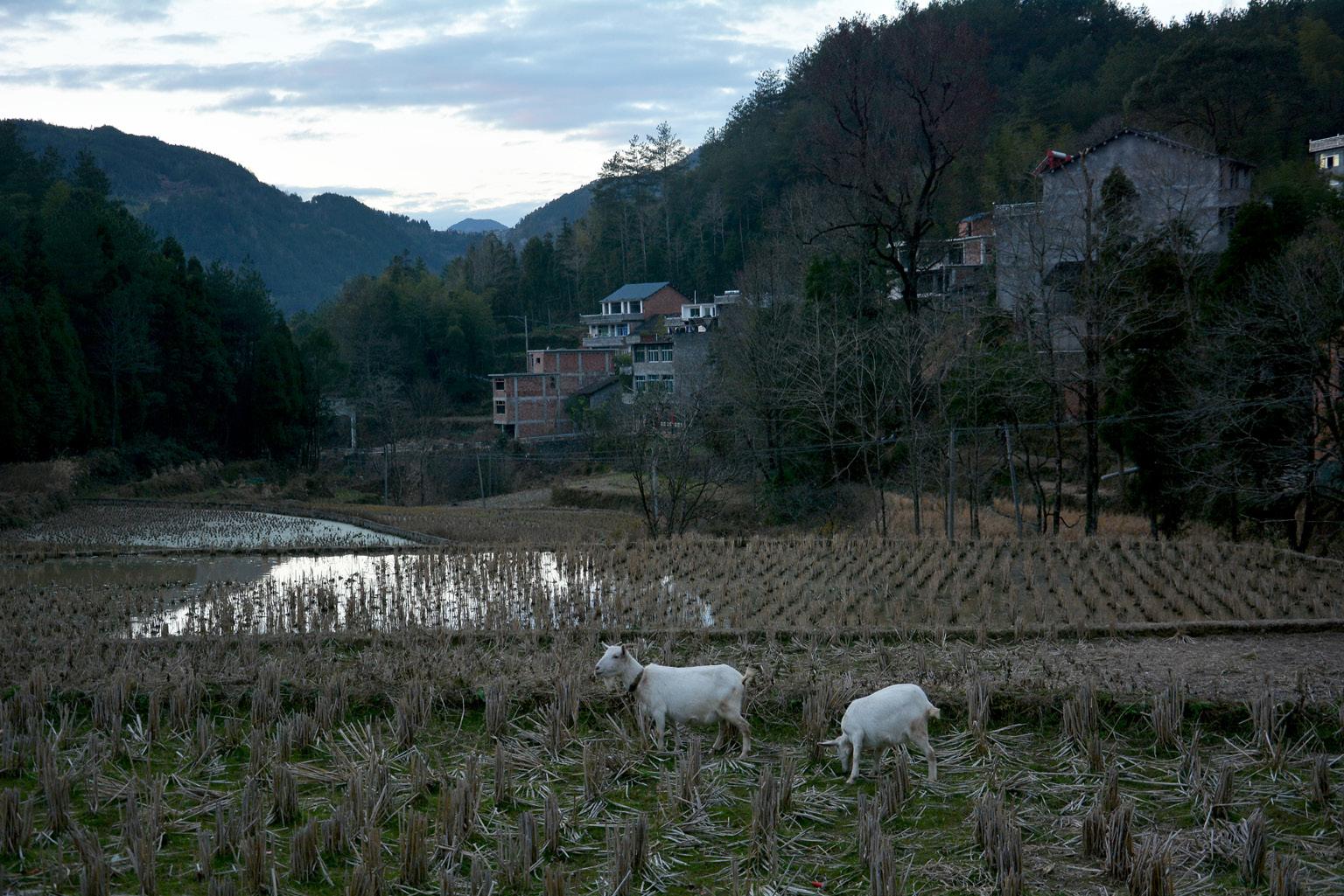 FIGURA 4. Paesaggio del villaggio di Fu'ao (foto: F. Serratore)